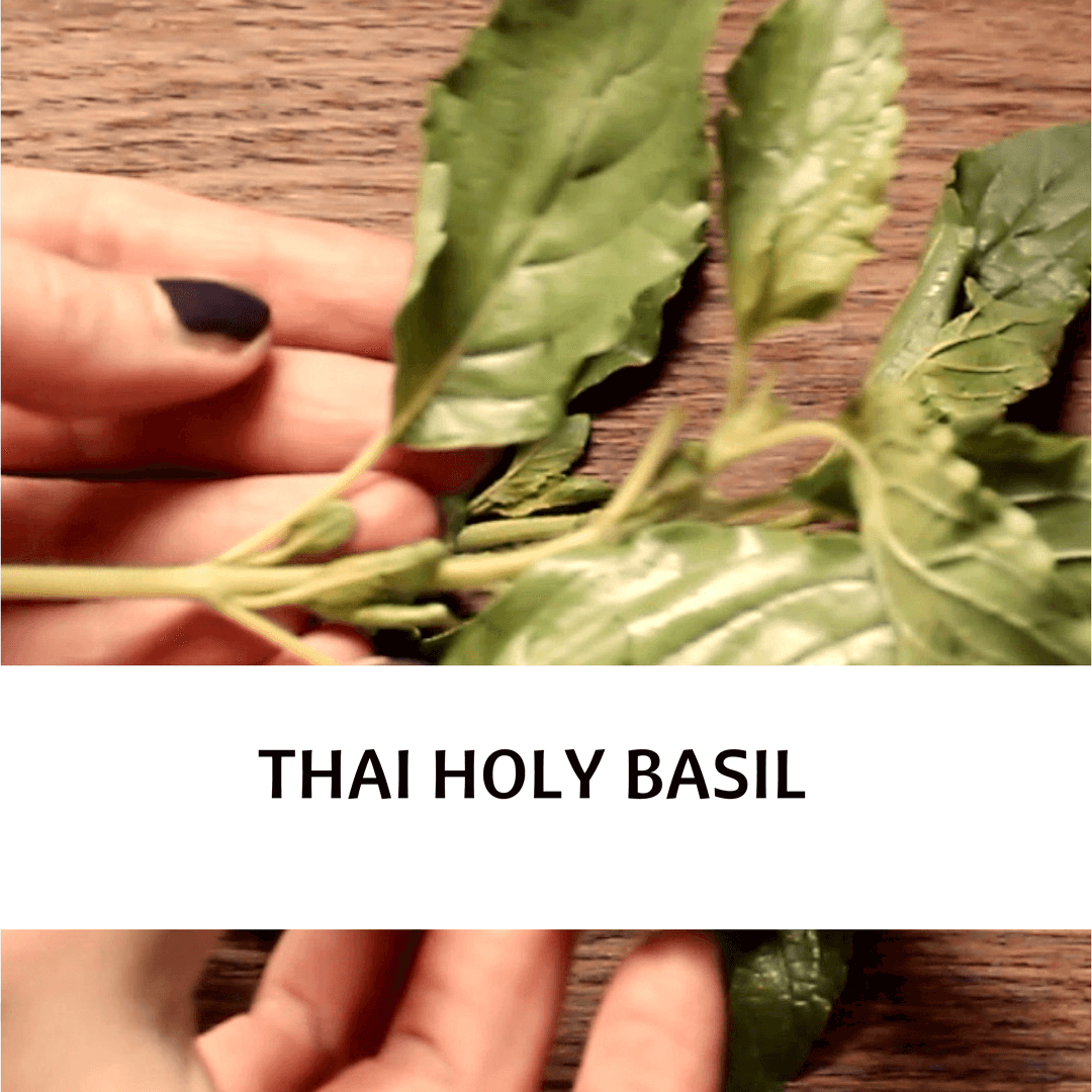 PICTURE OF THAI HOLY BASIL