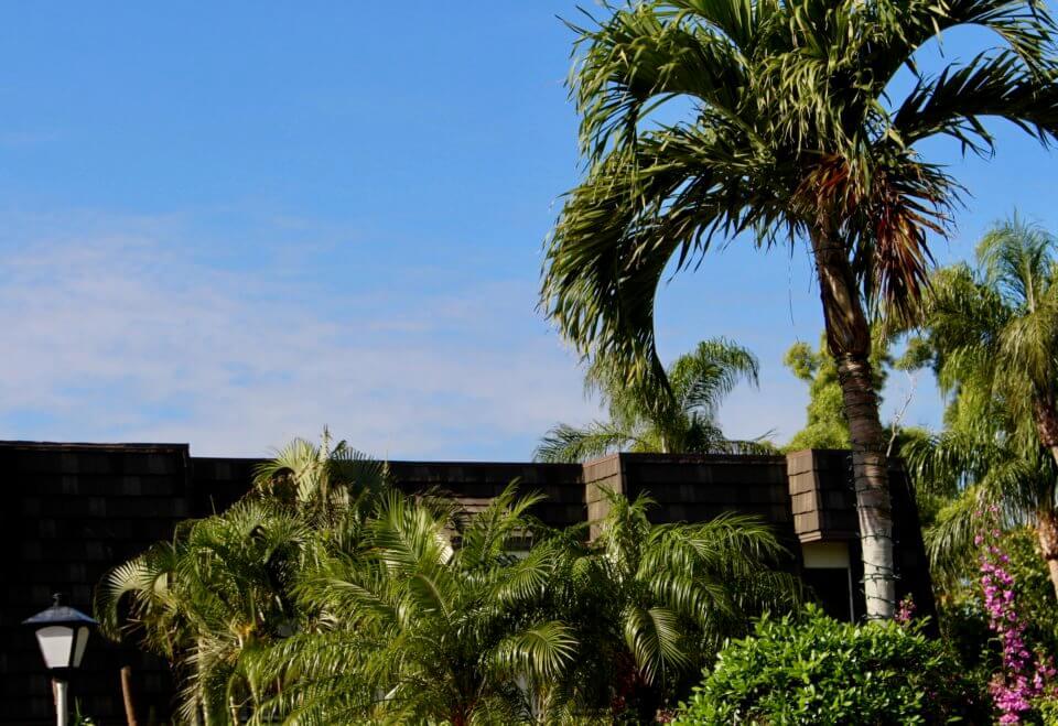 Bild von Palmen in Florida