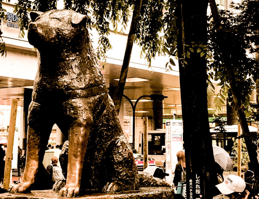 picture of hachiko