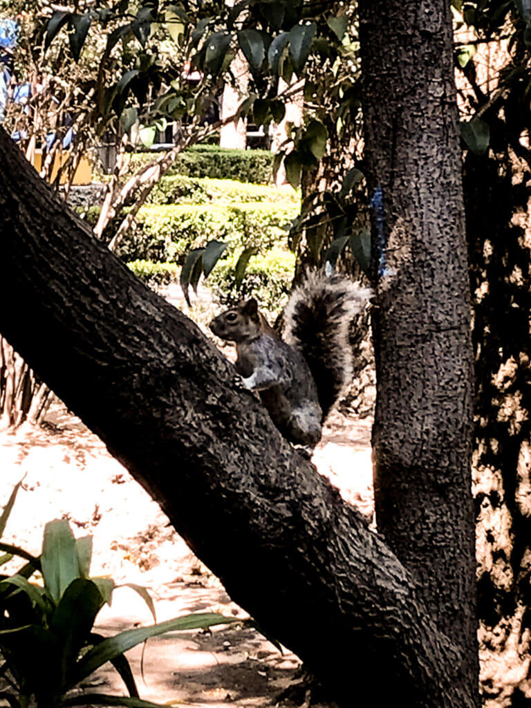 picture of squirrel