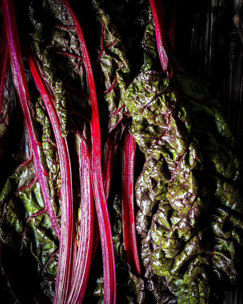 Swiss Chard/ Nina Bolders Food Photography